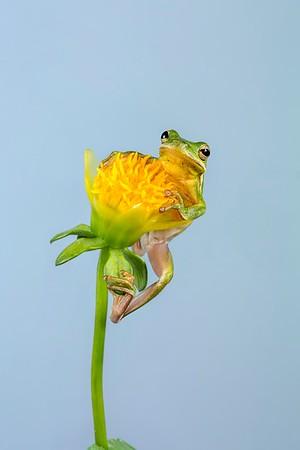 Frogscapes306_Cuchara_6599_042015_144047_5DM3L