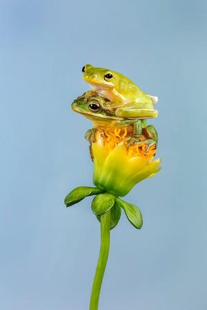 Frogscapes308_Cuchara_6621_042015_144201_5DM3L