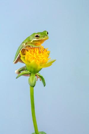 Frogscapes305_Cuchara_6591_042015_143846_5DM3L