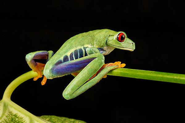 Frogscapes300_Cuchara_4461b_081512_201554_7DL