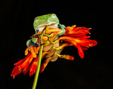 Frogscapes302_Cuchara_4711_081512_204742_7DL