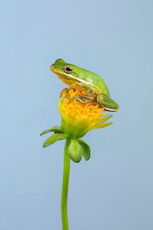 Frogscapes307_Cuchara_6604_042015_144103_5DM3L