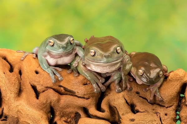 Frogscapes309_Cuchara_6738_090317_211218_SA7iiT