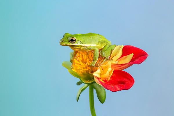Frogscapes303_Cuchara_6562_042015_143529_5DM3L