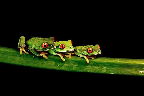 Frogscapes316_Cuchara_9553_090117_183054_5DM3L