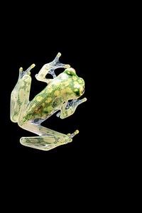 Frogscapes311_Cuchara_8980_090117_173043_5DM3L