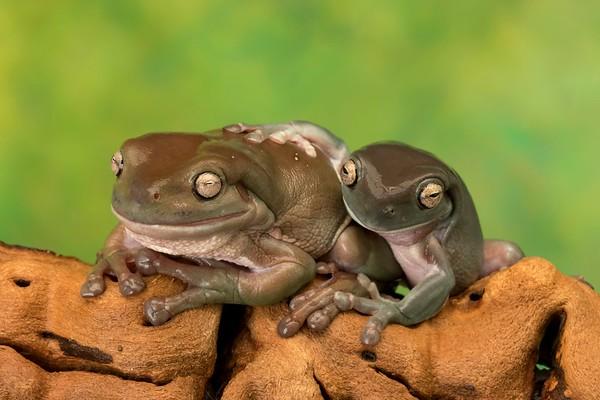 Frogscapes304_Cuchara_6568_090317_210012_SA7iiT