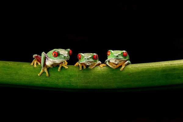 Frogscapes315_Cuchara_9475_090117_181719_5DM3L