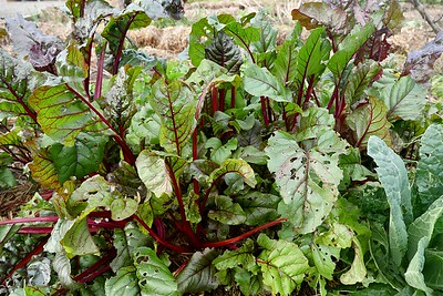 Winter Garden13