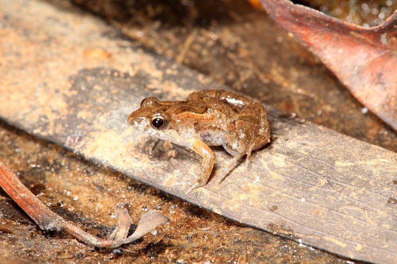 Found in Kakadu National Park, Northern Territory