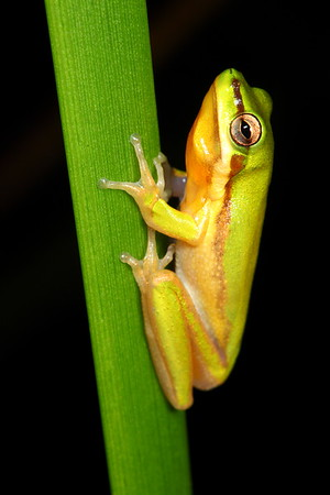 Frogs - My best photographs