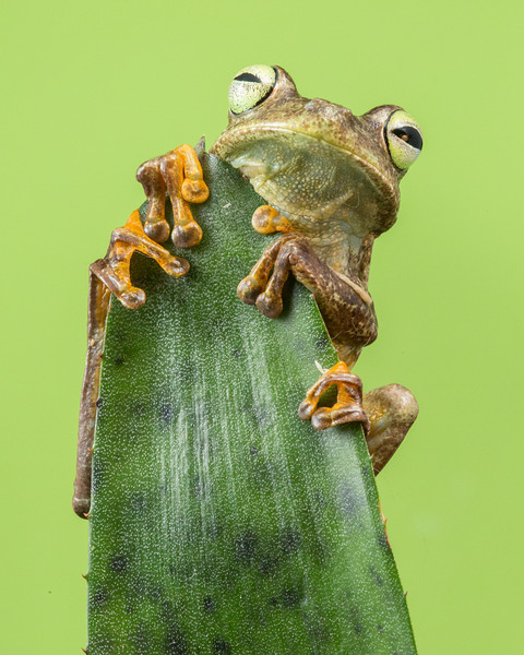 9467_68__0000_Frog - eyes open