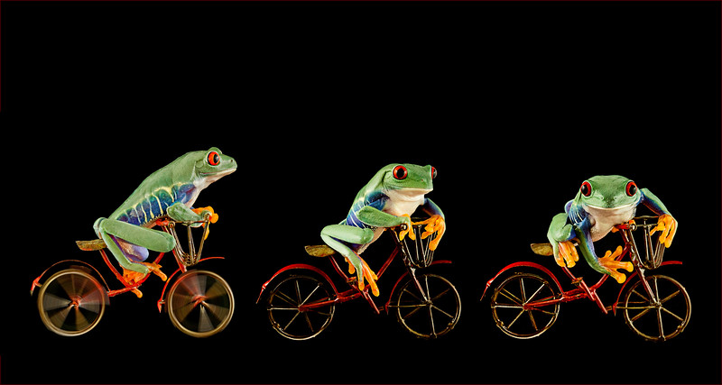 My Pet Frog Riding His Bicycle