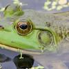 frog        5