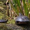 turtles          811sm
