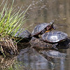 turtles          211sm