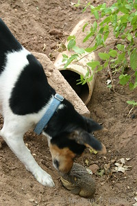 Curious Dog and Toad