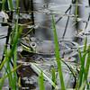 2013-05-22 Bullfrog a(8)