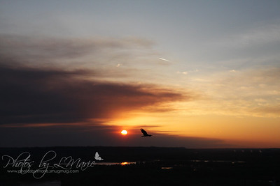 Red Wing Smokey Sunset