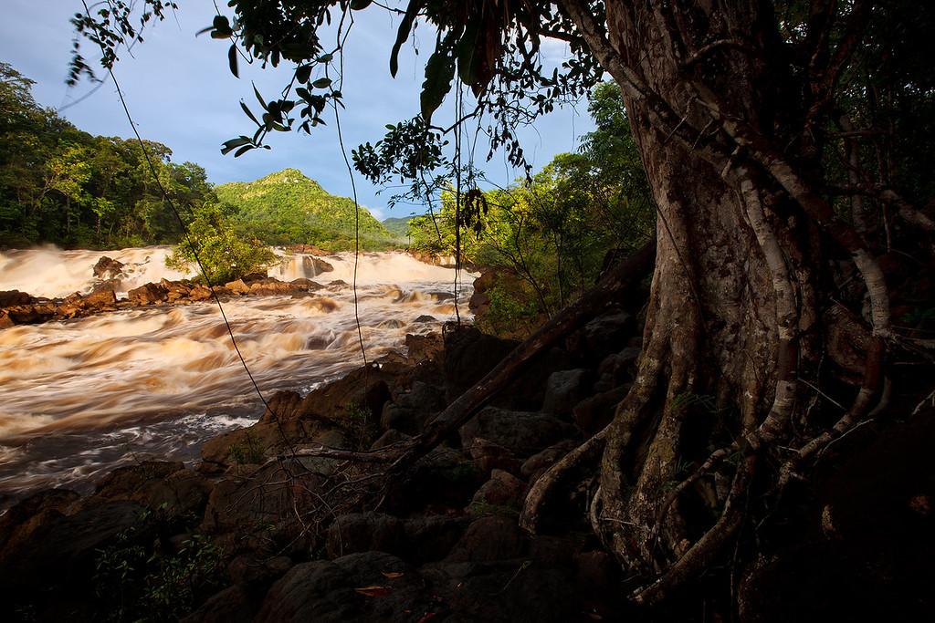 Potaro River runs through thick jungle