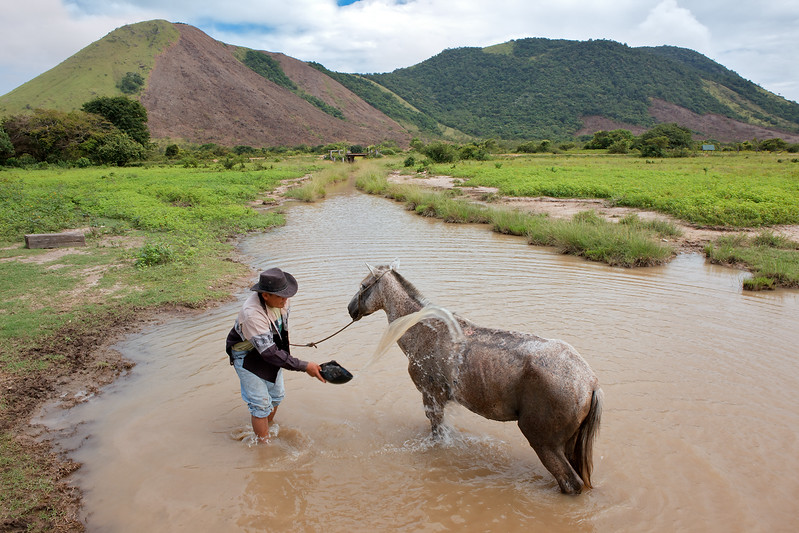 Man cooling down his horse