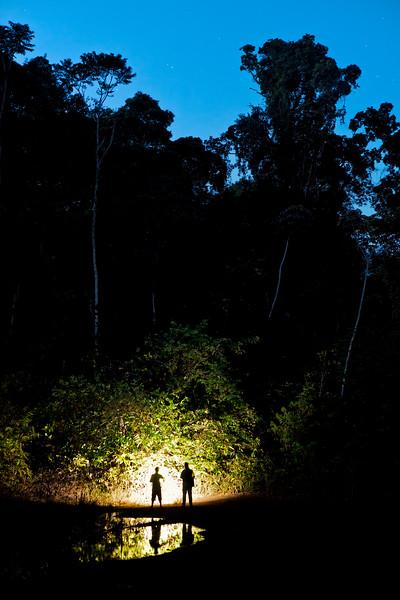 Nighttime in the jungle