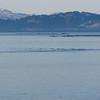 Approaching Kodiak on a beautiful day
