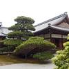 Ancient tree at Kinkaku Ji Golden Pavilion
