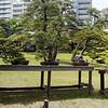 Happo-En bonsai trees