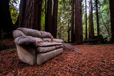 Sofa in the Pines