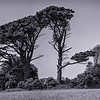 Channel Islands, Jersey (07 81)_0315__DSC0743-Edit