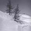 Oberengadin, Schweiz (03 1982)_0215__DSC0221