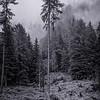Osttirol, Austria (07 87)_0215_DSC0606-Edit-Edit (ID)