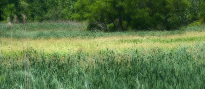 Grass Panorama Dreamscape