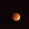 Bllod Moon Blurred