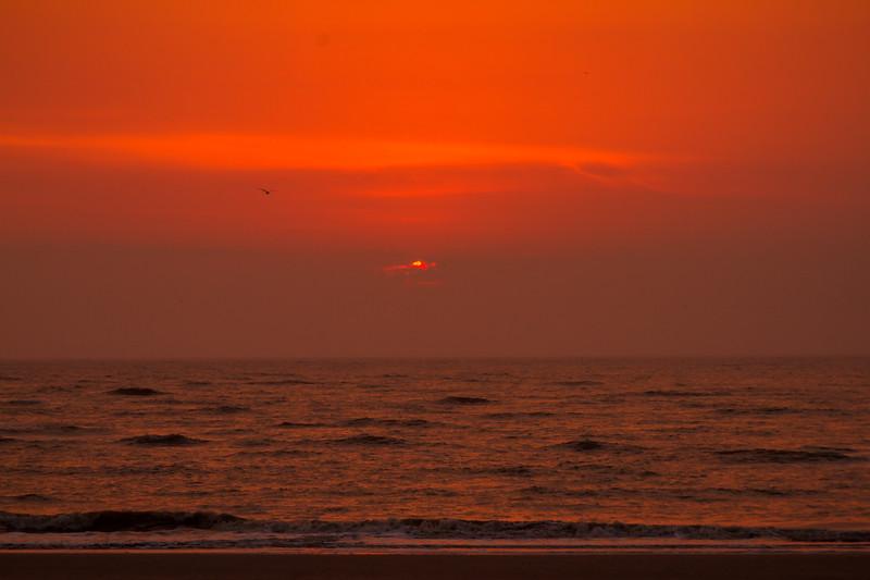 1 jekyll is sunrise w bird-4449