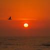 jekyll is sunrise w bird 2-4471