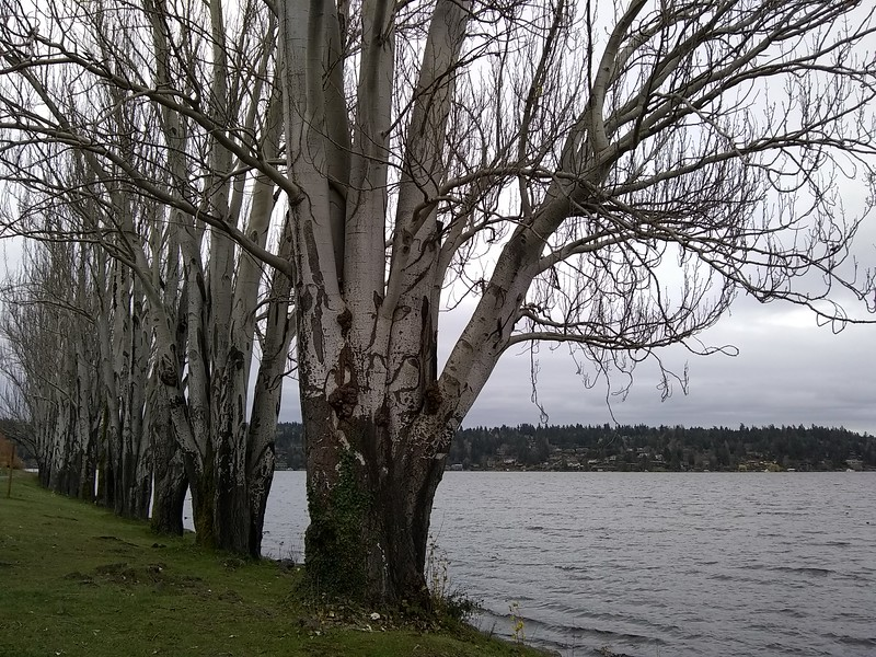 Seward Park- Seattle