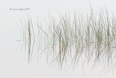 Reeds and Reflections I