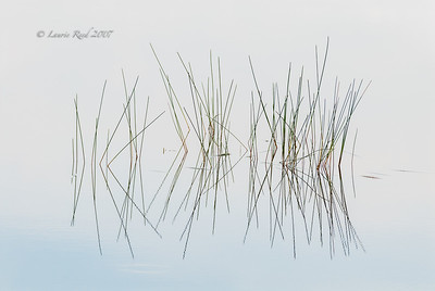 Reeds and Reflections II