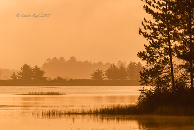 Golden Foggy Morning