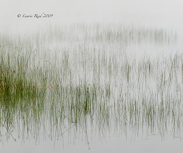 Reeds and Reflections IV