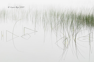 Reeds and Reflections III