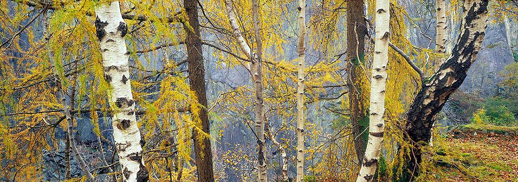 window to autumn, Tilberthwaite, Lake District