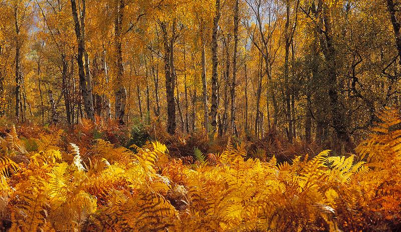 Danby Park, North York Moors