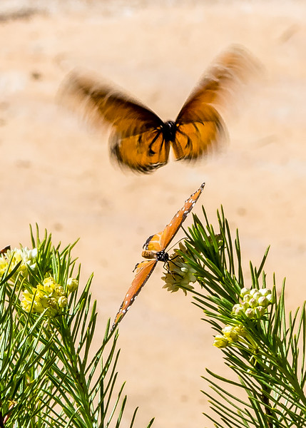 Butterfly Escape