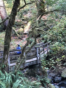 Redwood Nature Trail near Alfred A Loeb State Park.