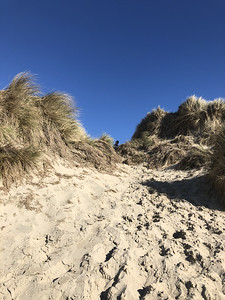 Sand dunes near South Jetty. Look who's peeking.