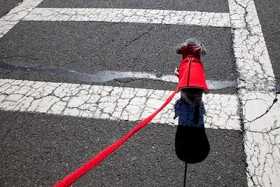 Widget on a Walk