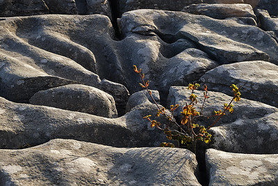 Limestone pavement, Ingleborough, Yorkshire Dales, England